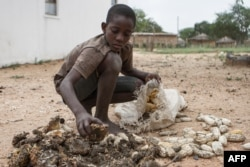 FILE - 13-year-old Prince Mpofu packs the previous year's harvest from the irrigated gardens for storage in the village of Nsezi in Matabeleland, southwestern Zimbabwe, Feb. 7, 2015.