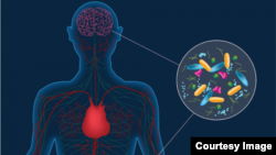 Artist's concept depicting microbes in the gut instigating