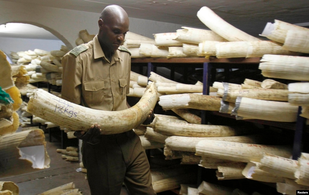 Zimbabweans Hit Back At South Africa Burning Out South: Zimbabwe Lobbies Neighbors On Ivory Trade, Will Not Burn