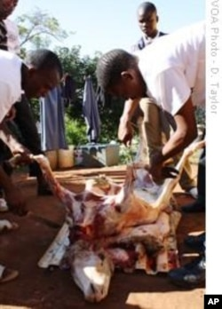 A sheep is slaughtered at Kwanyuswa Village, in South Africa's KwaZulu-Natal province, in honor of bride-to-be, Cynthia Mkhize