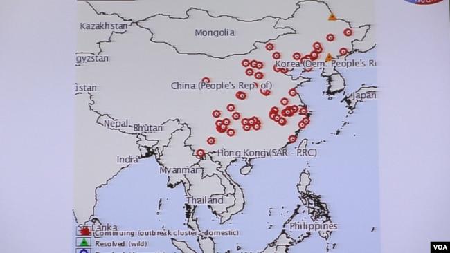台行政院长苏贞昌大年初一抱维尼熊宣传抗非洲猪瘟