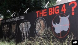 FILE - Mural calls for halt to rhino poaching in bid to save species from extinction, Johannesburg, South Africa, Sept. 18, 2013.