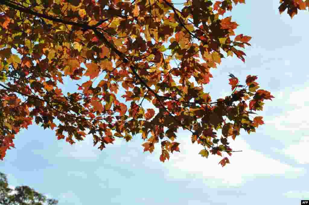 Lá mùa thu