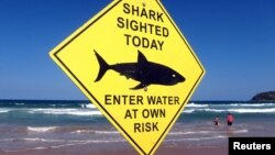 FILE - Swimmers walk into the surf next to a sign declaring a shark sighting on Sydney's Manly Beach, Australia, Nov. 24, 2015.