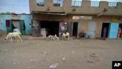 Des animaux marchent dans les rues de Nouakchott, Mauritane, le 9 août 2008.