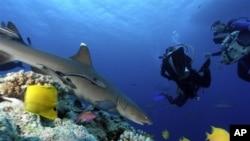 Các khu bảo tồn thiên nhiên này sẽ bao gồm tổng cộng 1,3 triệu cây số vuông đại dương, bao gồm Biển San hô ngoài khơi vùng duyên hải phía đông-bắc Australia
