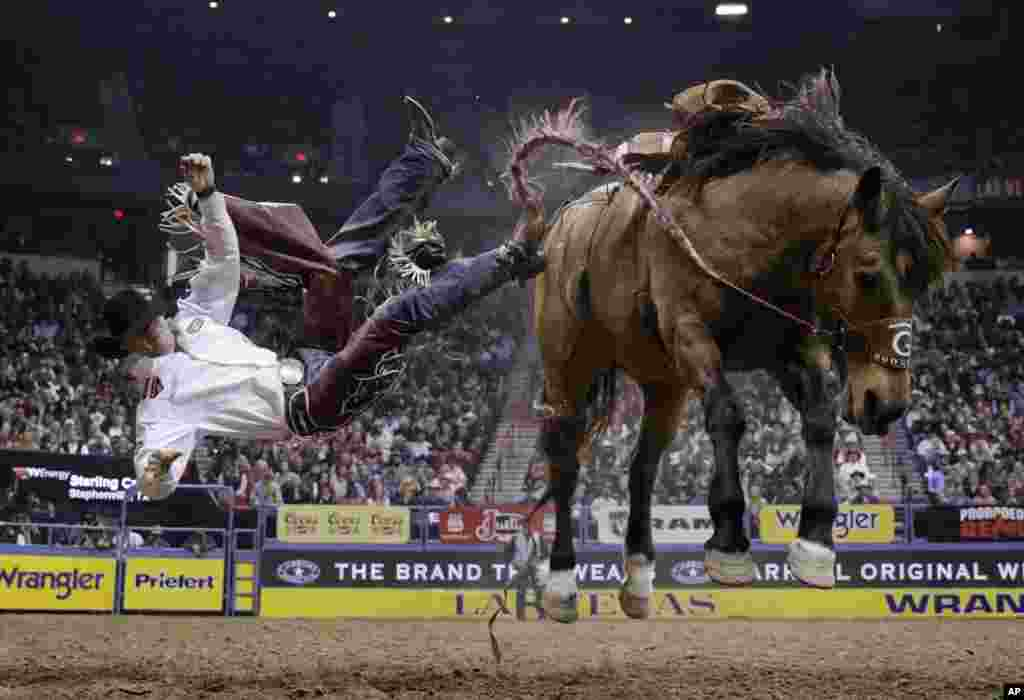 លោក Sterling Crawley ធ្លាក់ពីលើសេះរបស់គាត់ ខណៈដែលកំពុងប្រកួតនៅយប់ចុងក្រោយក្នុងព្រឹត្តិការណ៍ជិះសេះ National Finals Rodeo ក្នុងក្រុង Las Vagas រដ្ឋ Nevada សហរដ្ឋអាមេរិក កាលពីថ្ងៃទី១០ ខែធ្នូ ឆ្នាំ២០១៦។