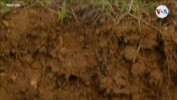Desechos para revitalizar el suelo