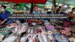 Troubling Report on Forced Labor in Fishing