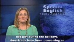 An Unhappy Thanksgiving for Turkey Farmers