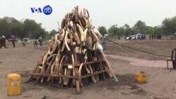 VOA 60 Afrique Bambara-Octobourou Kalo Tile Folow, 2018