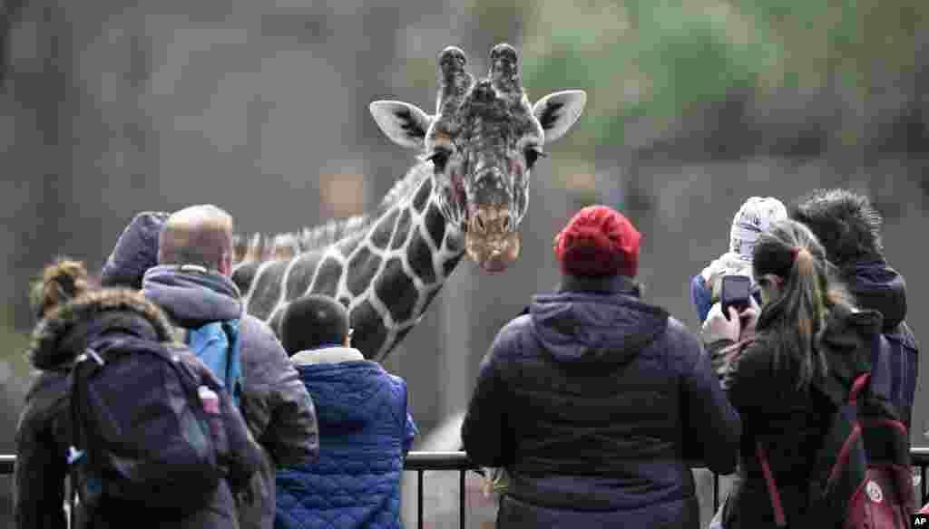 بازدیدکنندگان از باغ وحش دویسبورگ آلمان