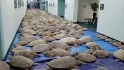 Texas Sea Turtles Rescue