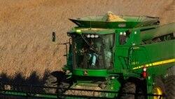 VOA连线(卡拉):中国收紧美国大豆进口检验标准
