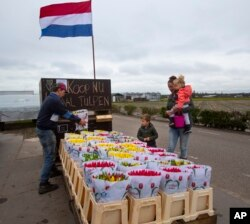 Frans van der Slot, left, puts tulips for sale on a stand outside his farm in Lisse, near Amsterdam, Netherlands, Thursday, March 19, 2020.