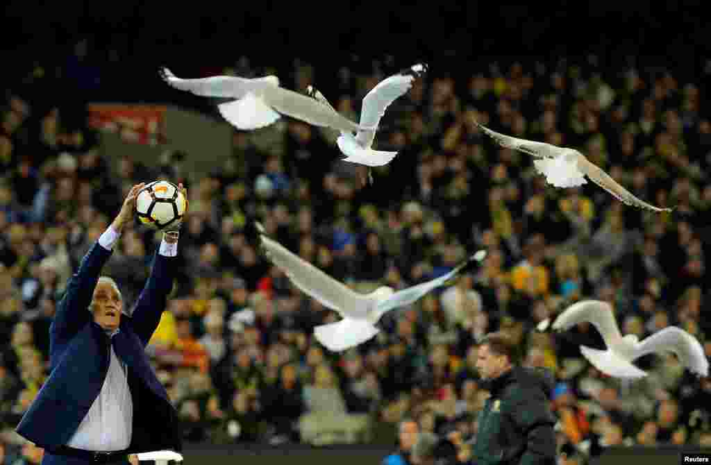 Brazil national soccer team coach Adenor Leonardo Bacchi - known as Tite - catches a ball while seagulls fly around the Melbourne Cricket Ground in Melbourne, Australia.