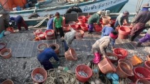 Thailand Fishing Industry