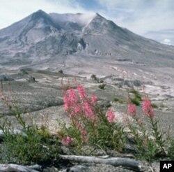 Biljni svijet na Mount St. Helens 1984.