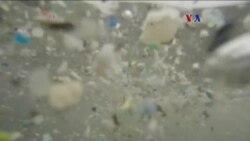 Plástico amenaza la vida marina