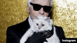 شوپت، گربه اشرافی کارل لاگرفلد