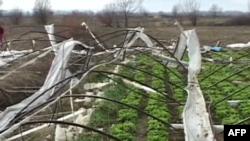 Moti i keq shkakton dëme në bujqësi në Veri të Shqipërisë