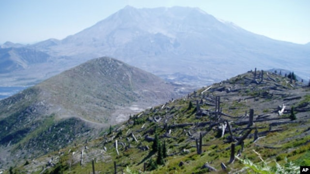 Regrowth in the Mount St. Helens blast zone