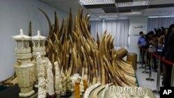 پکڑے گئے ہاتھی دانت صحافیوں کو دکھائے جارہے ہیں (فائل فوٹو)