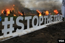 "The Twitter hashtag ""#stopthetrade is displayed at Kenya's ivory burn in Nairobi National Park, April 30, 2016. (J. Craig/VOA)"