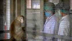 中國報告首例人類感染猴B病毒死亡病例