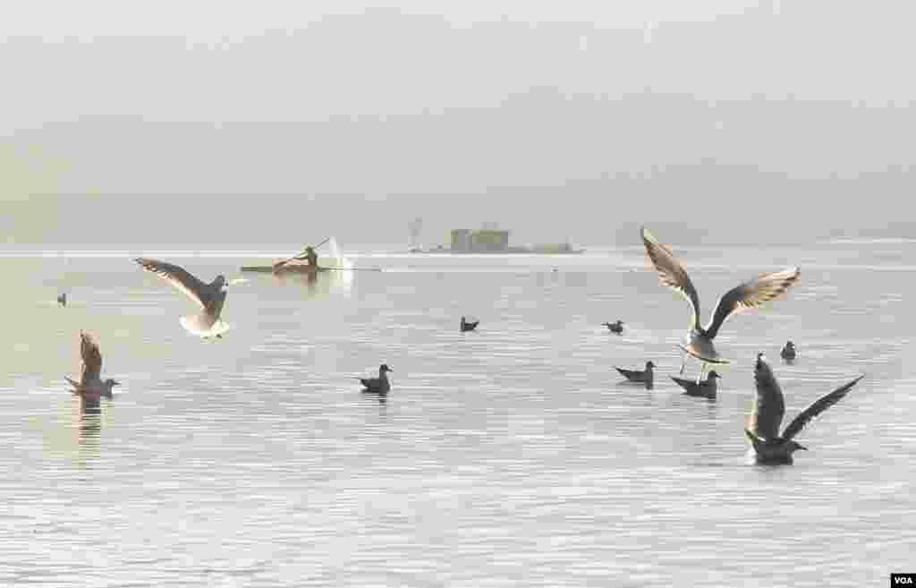 دریاچه زریبار مریوان عکس: امیر دلیری (ارسالی شما)
