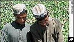 Washington i Moskva ne mogu se složiti u vezi suzbijanja afganistanskog opijuma