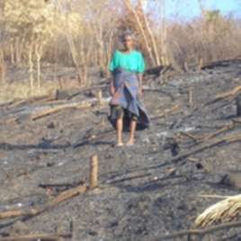 Slash and burn farming in Timor, Indonesia (ANTARA).