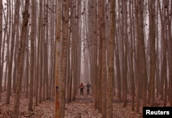 Men exercise among the trees on a cold winter morning in the outskirts of Srinagar, India, Dec. 2016.