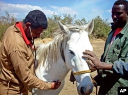 Keeping Equine healthy is a necessity