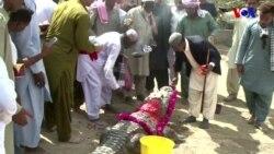 Pakistan'da Timsah Festivali Yıllar Sonra Yeniden Yapıldı