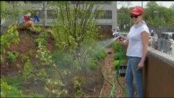 Kebun Terapung untuk Sayur dan Buah Warga New York
