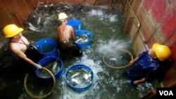 El mayor productor de pescado en el mundo es China.