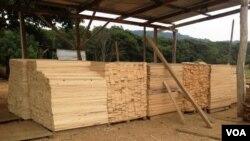 Abate de madeira controlado na Huíla - 2:06