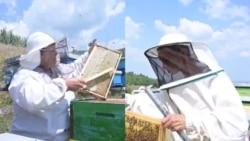 Еден ден со пчеларките Мирјана и Снежана: Органското пчеларство бара љубов и доверба кон пчелите