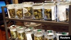 Setelah dua negara bagian di Amerika melegalisasi marijuana, para pemimpin Amerika Latin khawatir akan berdampak negatif bagi negara mereka (foto: dok).