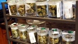 Nekoliko vrsta marihuane izloženo u radnji u Denveru, Koloradu