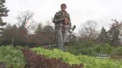Фермерство стає модним серед молоді