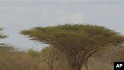 Região do Sahel enfrenta mais uma vez a ameaça de crise alimentar com êxodo das aldeias para as cidades