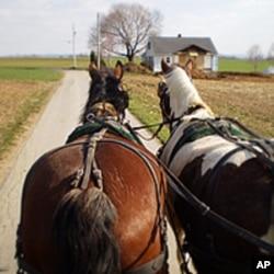 马是人类的伴侣动物也是劳作动物