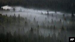 La niebla matutina se asienta sobre los árboles en el Parque nacional Yosemite en California.