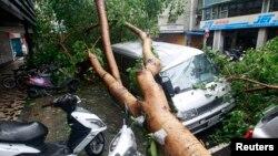 7月13日蘇力台風襲擊台灣時連根拔起的樹木壓壞汽車。