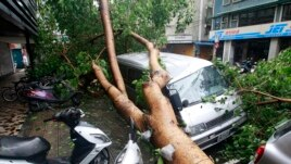 Vehicles are damaged by fallen trees uprooted by strong winds from Typhoon Soulik, in Taipei July 13, 2013.