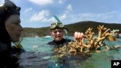 Australijske naučnice pokazuju deo odumirujućeg korala