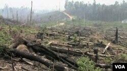 Pemerintah Indonesia meminta dukungan negara-negera lain untuk menghentikan laju kerusakan hutan dan penyelundupan kayu dari hutan Kalimantan (foto: dok).