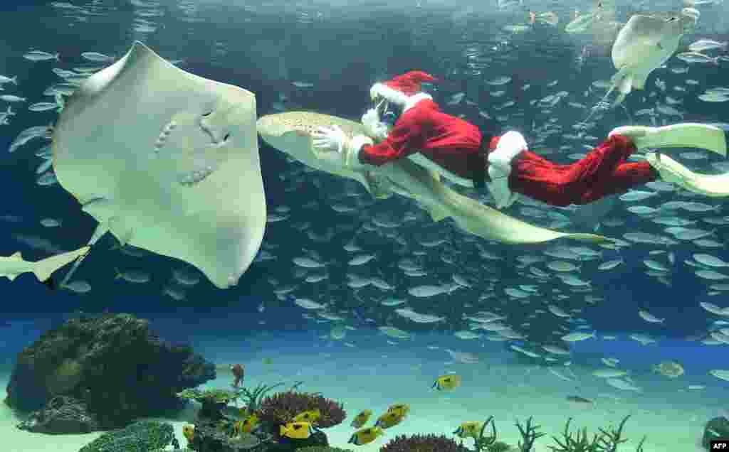 A diver dressed in a Santa Claus costume swims with fish at the Sunshine Aquarium in Tokyo, Japan.